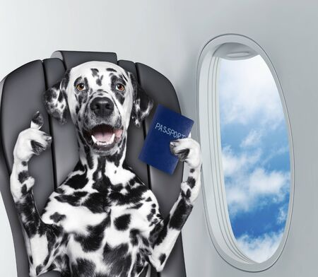 Dalmatian dog on board of airplain with passport
