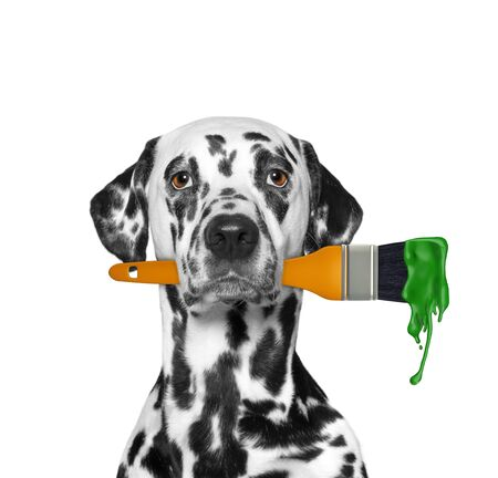 Dalmatian dog as a painter with brush and green color. Isolated on white 免版税图像