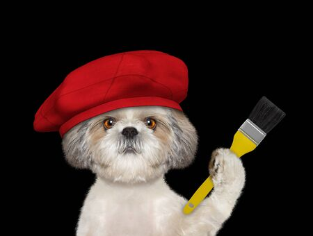 Shih tzu dog as a painter with a brush. Isolated on black