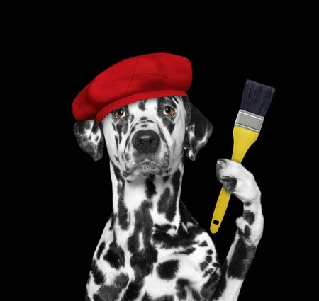 Dalmatian dog as a painter with a brush. Isolated on black