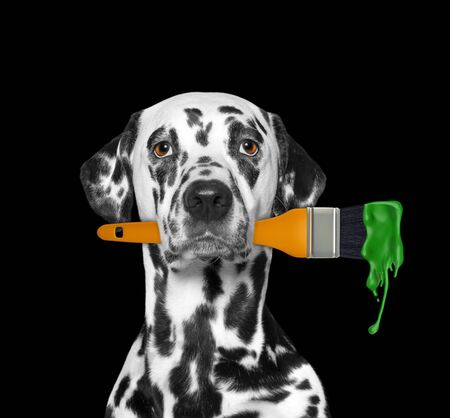 Dalmatian dog as a painter with brush and green color. Isolated on black 免版税图像