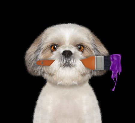 Cute dog as a painter with brush and purple color. Isolated on black 免版税图像