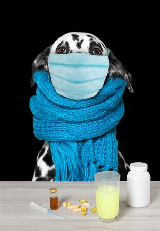 Dog face in medical mask closeup, concept virus, coronavirus, protection. Isolated on black