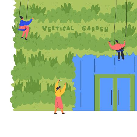 People care for the vertical garden.Environment friendly eco design of wall.Gardeners near green wall with instruments on a swing.A new way to decorate the exterior with house greenery.Vector flat  Ilustracja