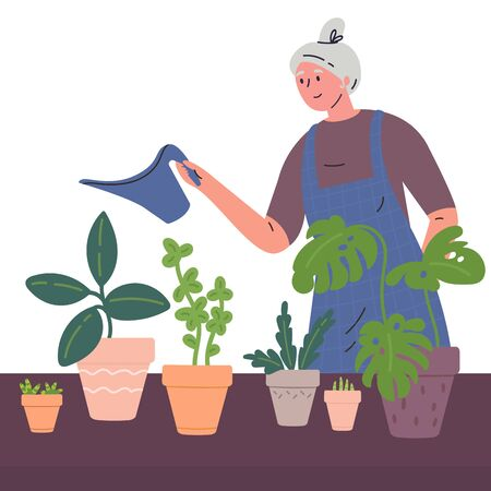 Mature woman watering houseplants from a watering can.Woman caring for indoor plants.Hobby.Colorful character.Vector illustration in flat style.