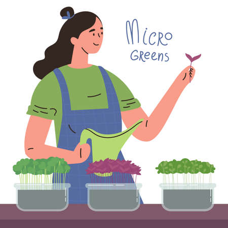 Happy girl with a microgreens boxes.Farming superfood at home for yourself.Woman with a watering can.Micro greens lettering.Vector cartoon illustration in flat style isolated on a white background. Ilustração