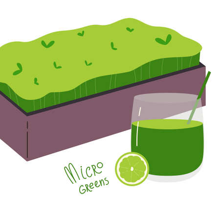 Microgreens box.Superfood and a glass of smoothie with a slice of lime.Growing superfood at home for yourself.Home farming.Vector cartoon illustration in flat style isolated on a white background.