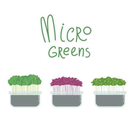 Microgreens box.Different kind of superfood.Growing superfood at home for yourself.Home farming.Healthy food.Vector cartoon illustration in flat style isolated on a white background.