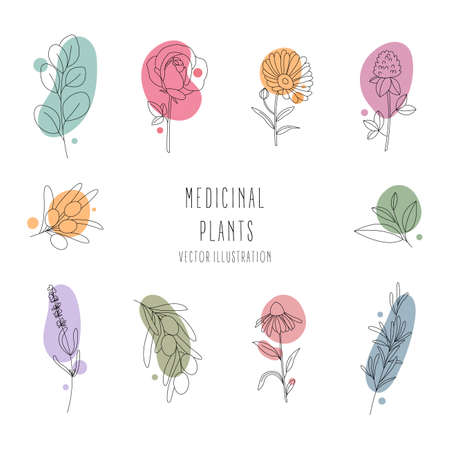 Set of medicinal plants.Collection hand drawn, botanical and healing isolated plants. Design of cosmetics herbs. Line art with abstract colorful forms.Contour. Vector illustration.
