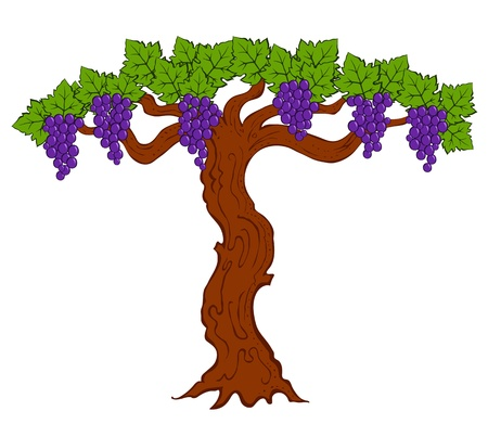 painted grapes and leaves on a tree vector Vector