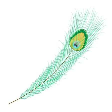 Single peacock feather on white Ilustrace