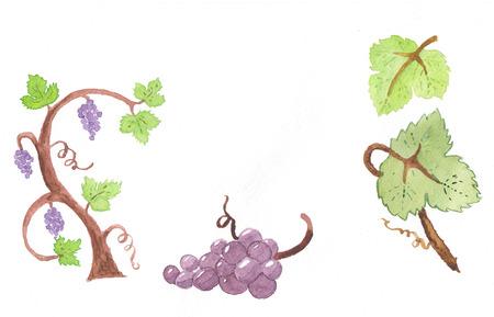 creeper: Watercolor grape elements for design