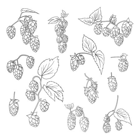 Hop doodle hand drawn branches.