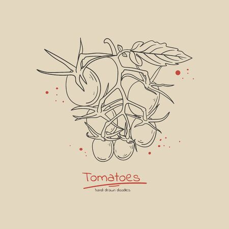 Cherry tomato branch hand drawn doodle style concept illustration for label. poster, flyer, sale banner. Fresh organic food.  イラスト・ベクター素材