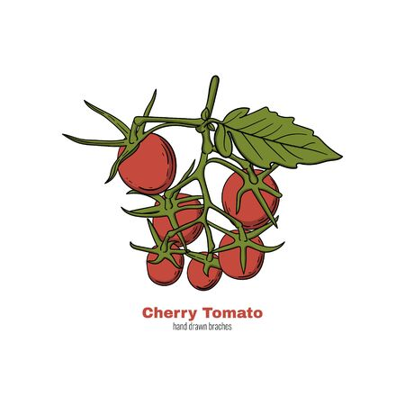 Cherry tomato hand drawn branch. Doodle style cartoon concept vector illustration for logo, print, banner, flyer, festival poster etc. Standard-Bild - 131840168