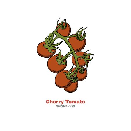 Cherry tomato hand drawn branch. Doodle style cartoon concept vector illustration for logo, print, banner, flyer, festival poster etc.  イラスト・ベクター素材