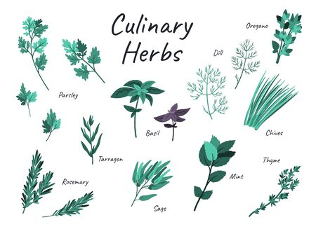 Culinary herbs doodle hand drawn illustration isolated on white background. Flat cartoon free hand drawing. Stock vector