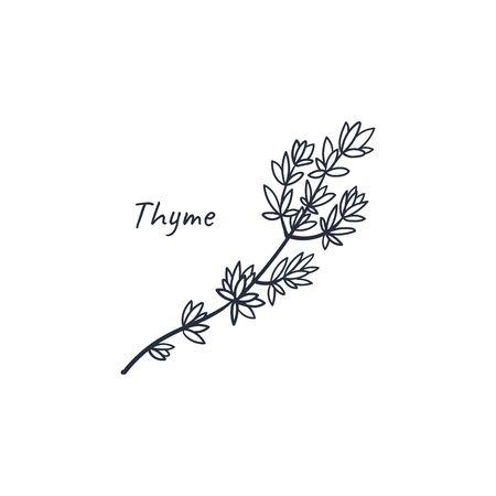 Thymian handgezeichnetes Doodle kulinarisches Kraut. Vektorillustration lokalisiert auf weißem Hintergrund. Stock Vektor Vektorgrafik