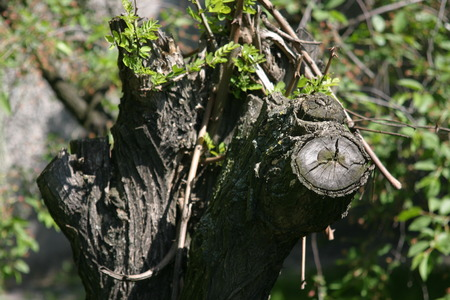 live again: The Beginning of Life, new branch on the extremely old tree