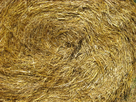 hayrick: Straw closeup for backgrounds. Close up of hay bale. Stock Photo