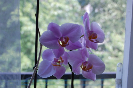 orchid house: Orchid heads the list of the most fashionable house plants Stock Photo
