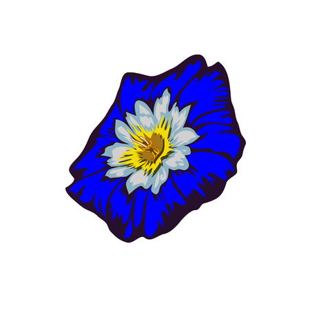 ipomoea: Flower Ipomoea, Morning Glory on white background Illustration