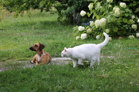 Cat and Dog in the garden. Real friends