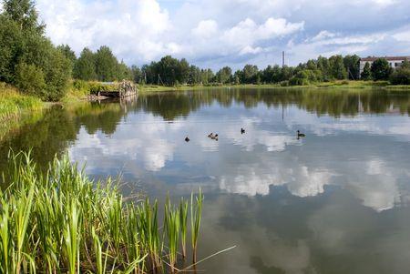 Landscape. Summer photo