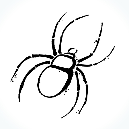 Hand drawn spider isolated on white background Illustration