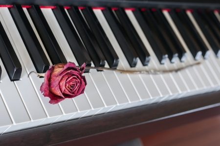 Dried Red Rose on a piano key photo