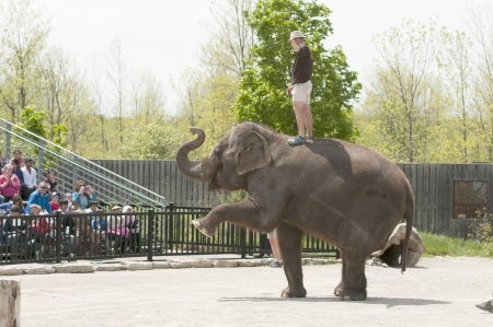 clumsiness: Elephant with its trainer performing for people