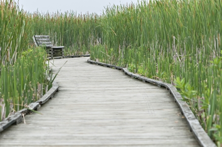 Marsh boardwalk with bench at Point pelee ontario canada photo