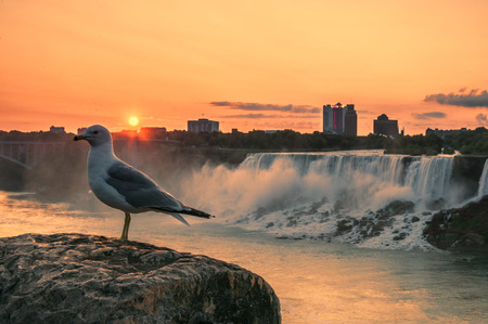 Sunrise on american falls with seagull on the foreground