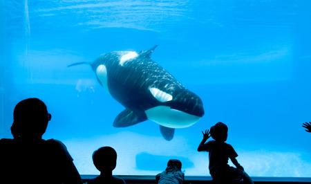 People watching killer whale in the aquarium. Standard-Bild