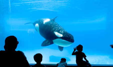 People watching killer whale in the aquarium. Imagens