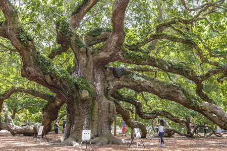 Angel Oak ist eine lebende Eiche aus dem Süden (Quercus virginiana) im Angel Oak Park auf Johns Island in der Nähe von Charleston, South Carolina. Der Baum wird auf 400-500 Jahre geschätzt.