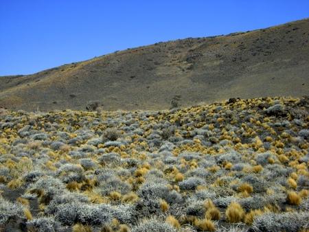 식물 화산의 Payunia