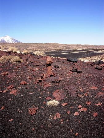 Payunia 화산 회로의 화산 폭탄