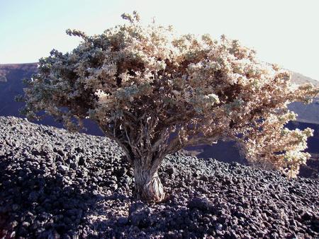 검은 사막에 작은 나무