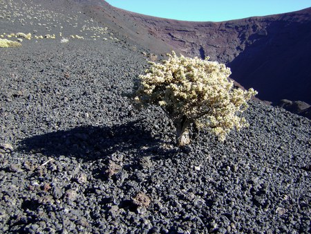 검은 사막에있는 작은 나무 스톡 콘텐츠
