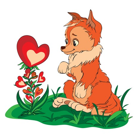 clearing: red fox in a clearing looking at flower of hearts