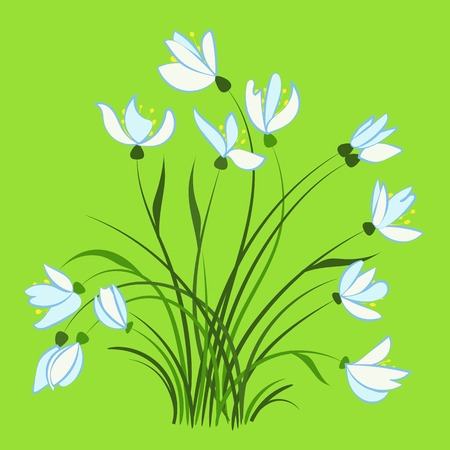 immaculate: First spring flowers Illustration