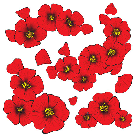 petal: isolate poppy flowers with petal for decorate and design of gree