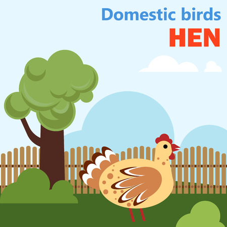 Domestic bird hen