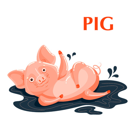 Educational flashcard pig sporting in a mud puddle