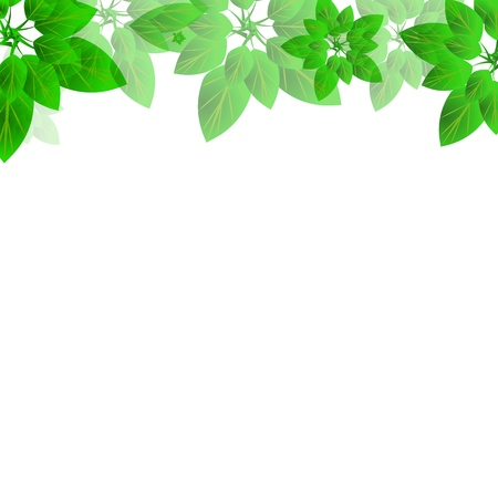 Summer or spring leaves banner concept. Stylish background with top borders of colorful leaves with blank space for text block. Vector illustration frame for the design and decoration of printed and web products, flyers, cards, banners and headpieces, organic packaging. Çizim