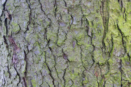 The texture of the tree bark, background