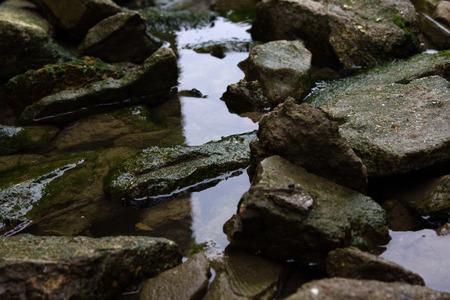 algas verdes: Piedras en el agua cubiertos por algas verdes Foto de archivo