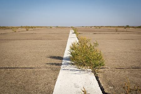 Abandoned overgrown road in the desert tumbleweed Imagens - 50265266