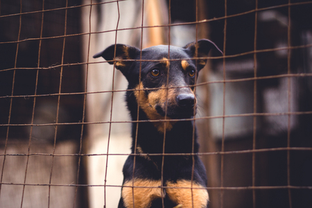 Shelter for homeless dogs, waiting for a new owner Stok Fotoğraf